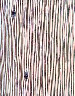 PINACEAE Pinus strobus