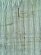 PODOCARPACEAE Afrocarpus falcatus