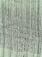 CUPRESSACEAE Chamaecyparis lawsoniana