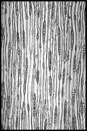 PINACEAE Pinus halepensis