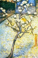 Blossoming Pear Tree