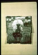 Sheep No. 4, 1973