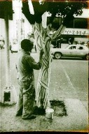 Mexican Barber's Painted Tree