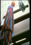 Big Thicket / Raven