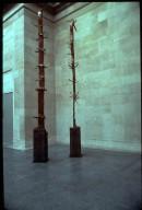 Tree of 12 Meters