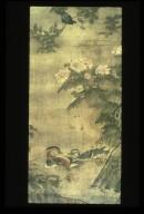 Ducks under Hibiscus