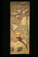 Golden Pheasant and Bamboos