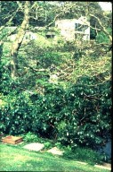Creek Vean House