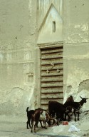 Shibam: Old Walled City