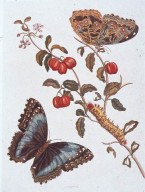 Hand-Colored Engraving of Butterflies and Caterpillar
