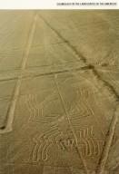 Nazca Lines: Spider