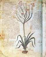 Codex Vindobonensis