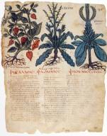 Codex Neapolitanus