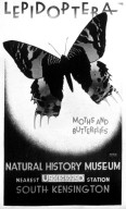 Lepidoptera: Moth and Butterflies, London Underground Poster