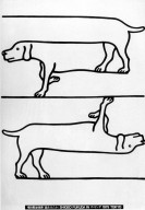 Poster with Dachshund Illusion