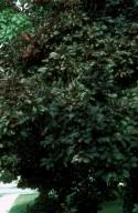Dull Green Plants