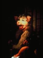 Suzi Swine