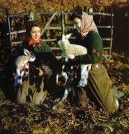 Land Army Women with Lambs