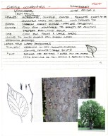 Horticulture Identification Cards: Trees and Shrubs