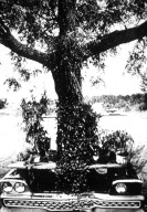Vehicles: Car-Tree-Dining Table