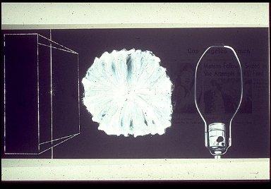 X-Rayed Flower