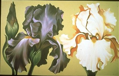 Violet Iris and Apricot Iris on Beige