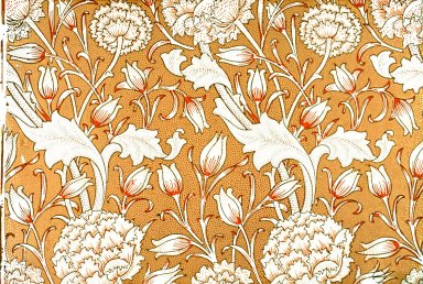 Wild Tulip Wallpaper Series: Orange
