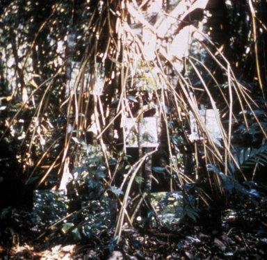 Yucatan Mirror Displacement #7
