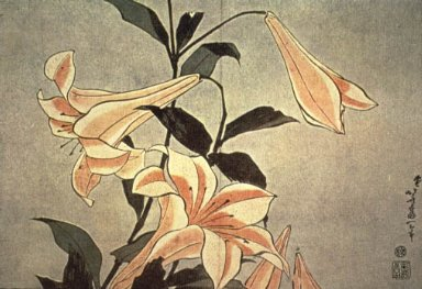 Flowers: Lily