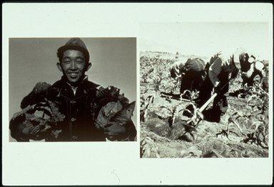 Richard Kobayashi, Farmer with Cabbages