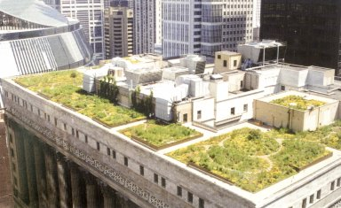 Chicago City Hall Green Roof Garden