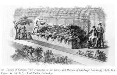 Luxury of Garden
