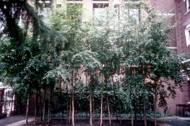 Erik van Egeraat's Office Garden