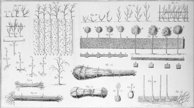 Methods of Packing and Planting Young Trees