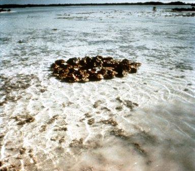 Sunken Island