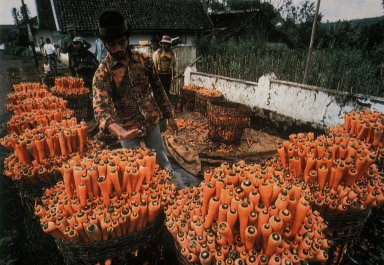 Baskets of Carrots on Their Way to Market