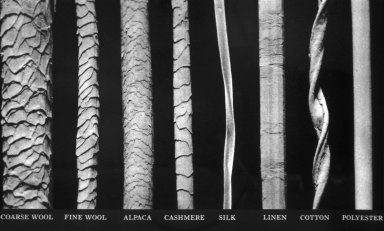 Microscopic Photograph of Various Fiber Structures