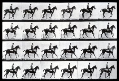 Animal Locomotion: Horse in Motion