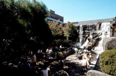 Seattle Waterfall Garden
