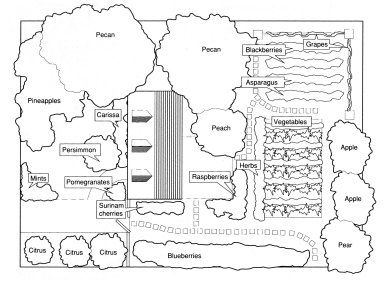 Garden Design with Edible Front and Back Yard Plantings