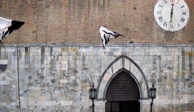 Palio di Siena, August 15-16, 1984 (Cultural Documentation)