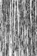 AEXTOXICACEAE Aextoxicon cf. punctatum