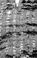 LEGUMINOSAE DETARIOIDEAE Cynometra sternii