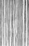 CUNONIACEAE Caldcluvia paniculata