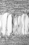 ARALIACEAE Hedera helix