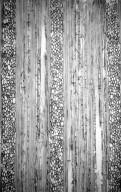 CARDIOPTERIDACEAE Citronella paniculata