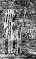 PITTOSPORACEAE Pittosporum colensoi