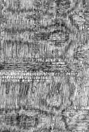 LEGUMINOSAE PAPILIONOIDEAE Angylocalyx braunii