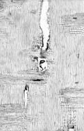 LEGUMINOSAE PAPILIONOIDEAE Cladrastis kentukea