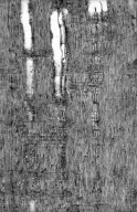 LEGUMINOSAE PAPILIONOIDEAE Myrocarpus frondosus